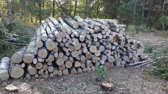 Wycinka pielęgnacja drzew rębak czyszczenie koszenie działek mielenie