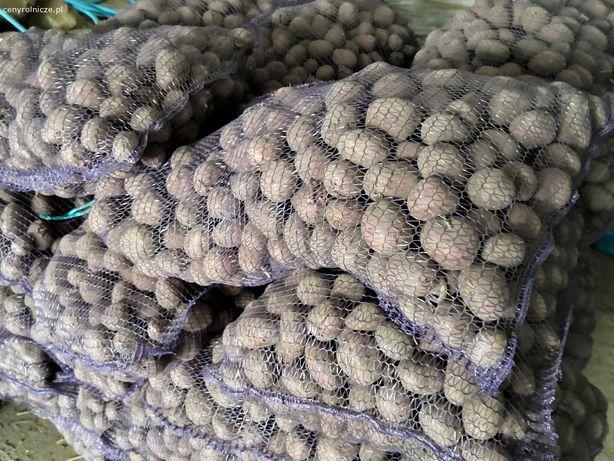 Ziemniaki bellarosa wielkość sadzeniaka