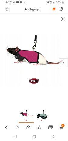Smyczka dla szczurka