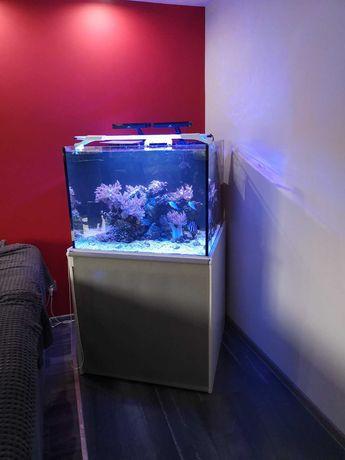Akwarium Morskie  zestaw