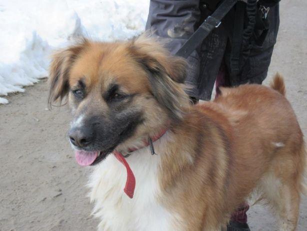 Niuśka - psia piękność, która 2 lata spędziła zamknięta w piwnicy ...