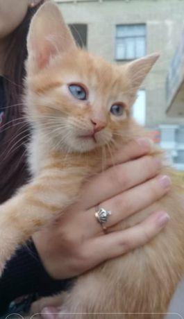 Отдам рыжего котёнка ,мальчик 1 месяц