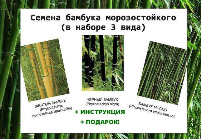 Семена бамбука морозостойкого 3 вида (90 шт)