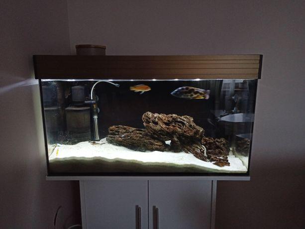 Akwarium 120L LED Malawi