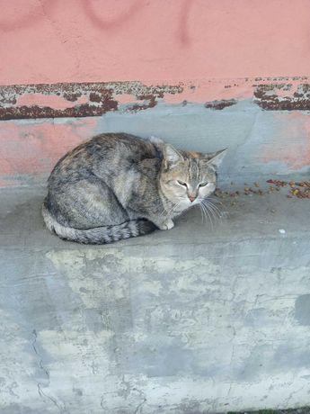 Красивая кошечка ищет Любящую Семью