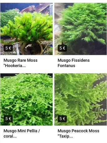 Plantas/musgos aquário - rare moss, fissidens, peacock, mini pelia
