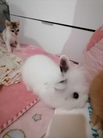 Ofereço casal coelhos anões