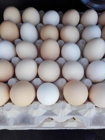 Jajka JAJA Jajo BEZ pośredników - prosto od PRODUCENTA