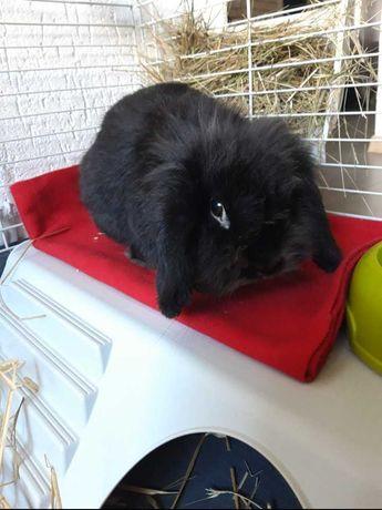 Klatka dla króliczka