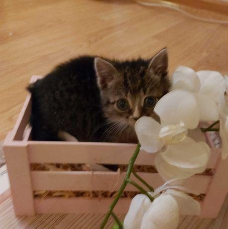 Шукаємо господарів для котика.