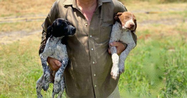 Cedem-se cães de caça, pointers / cruzamento pointers - brack