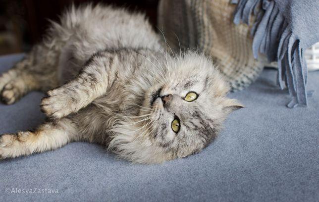 Спасите из приюта ласкового необыкновенного красавца кота кастрирован