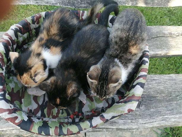 Oddam 3 koty za darmo.