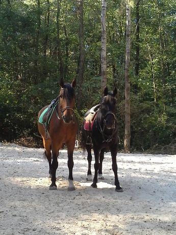 """Конные прогулки, конный клуб """"Кентавр"""", 3 км. от Киева."""