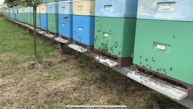 Miód pszczeli hurt,pasieka,rodziny pszczele,ule,pszczoły,odkłady,matki