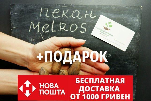 """Орех пекан сорт """"Melros"""" семена 10 шт для саженцев горіх насіння кария"""