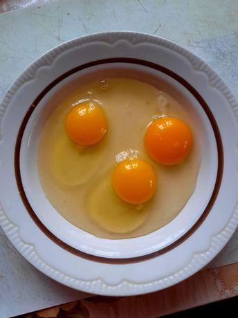 Jajka kurze ,kacze i gęsi