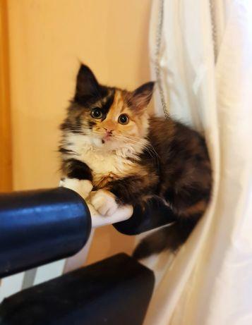 Кошечка Афина. Бесплатно.