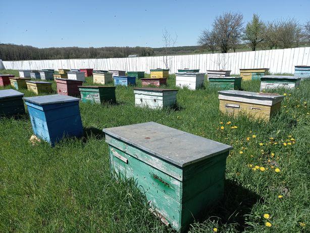 Бджоли, бджолопакети