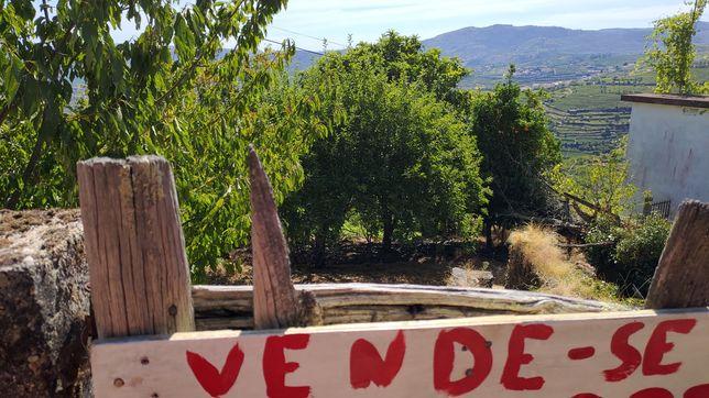 Terreno com ruína no Douro