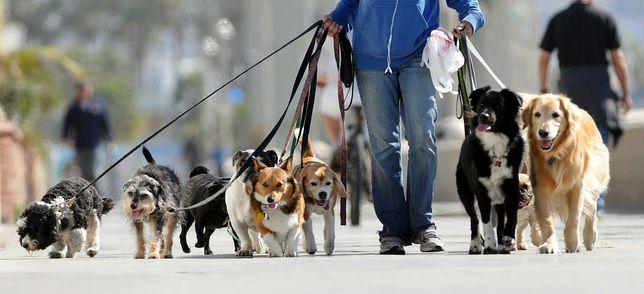 Passear Cães / Cuidar de Cães