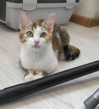 Кішка рудий+сірий+білий