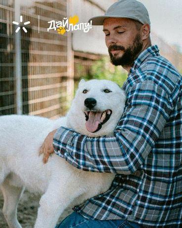 Белоснежный красавец Ирвин ищет своего человека щенок щенки щенята