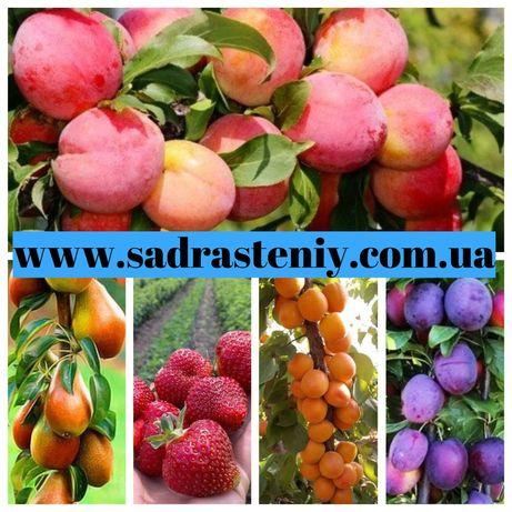 Саженцы плодовых деревьев, кустарников, розы. Большой ассортимент!