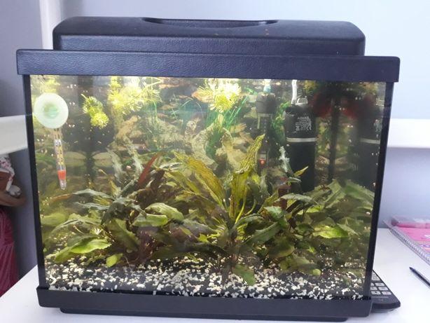 Akwarium i wyposażenie