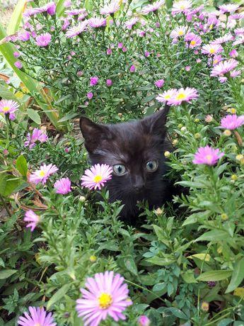 Отдам черного котенка добрым людям