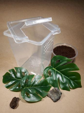 2 pakiety pojemniki z klapką dla skakunów ptasznik nadrzewny terrarium