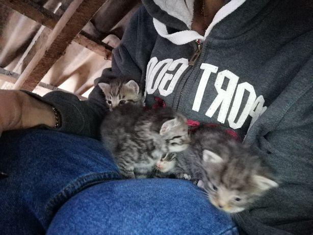 Oddam małe kociaki
