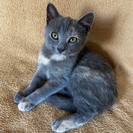 Котенок девочка, 3мес