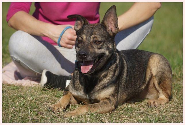 Lotos - przyjazny, wesoły, kontaktowy pies szuka domu