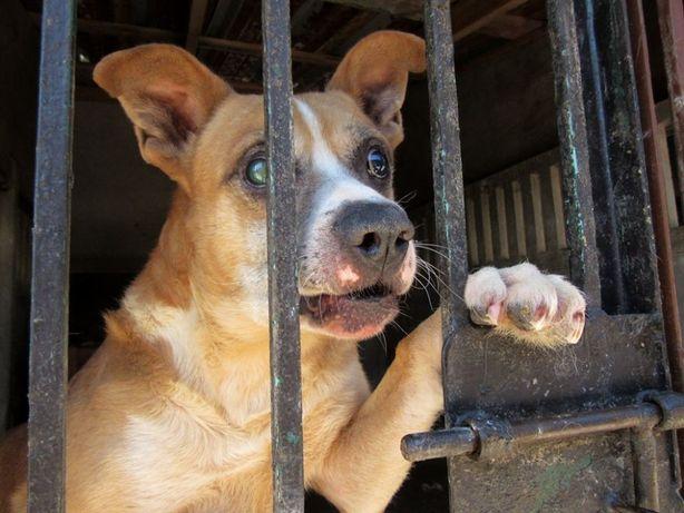 Miniuś- niewidomy, bez szans na adopcję