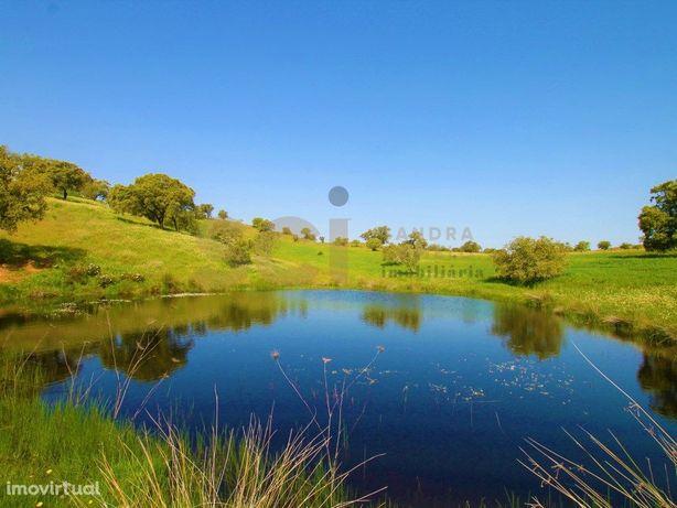 Herdade com setenta e oito hectares em Vila Nova de São B...