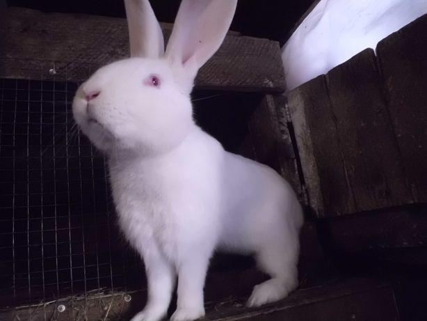 кролики малыши и взрослые