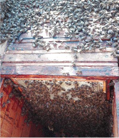 Sprzedam pszczoły z ulami