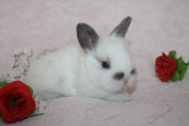 Праздничные кролики уже в продаже