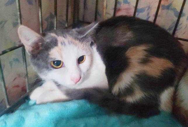 Маленьке котяче чудо, Мальвуся. 3 місяці. Кішка, кіт, Київ