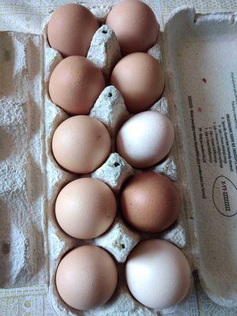 Wiejskie jajka jaja