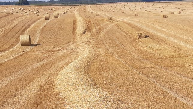 Słoma z różnych zbóż z wiaty