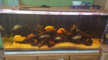 Kompletne akwarium 240 l z szafka