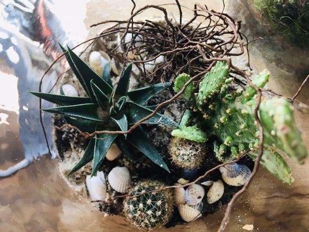 Ogród w szkle Sukulenty | las w szkle 28 cm