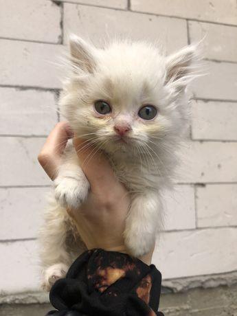 Кошенята у добрі ручки Кот кошка коты
