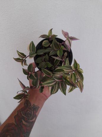 Planta de exterior e interior