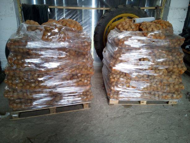 Ziemniak wineta gala