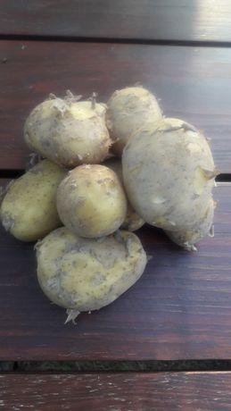 Ziemniaki młode jadalne