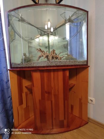 Угловой аквариум с деревянной тумбой.