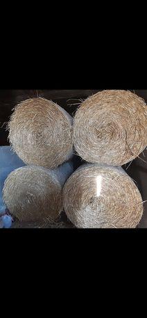 Słoma w balotach pszenna 130/130